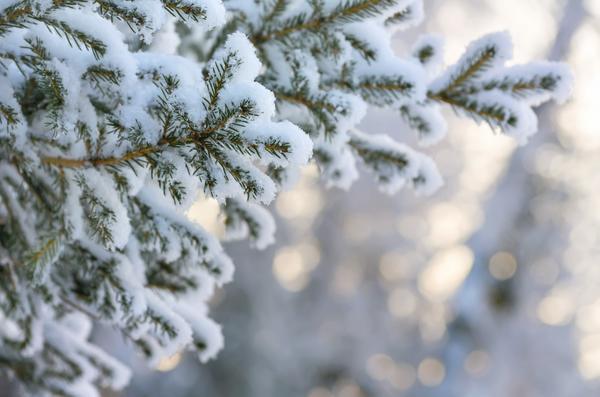 Ветки под снегом