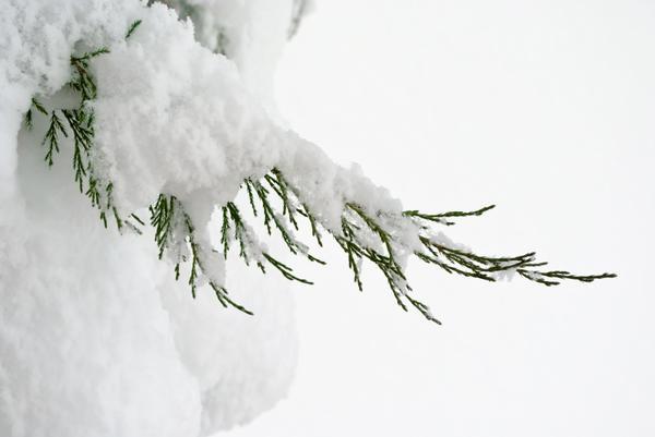 Снег как укрытие