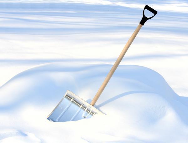 Снег - лучшее укрытие для сада