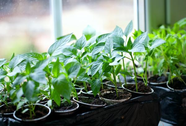 Когда сажать овощи. Сроки посадки семян основных 61