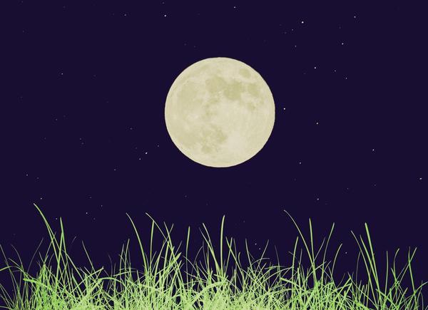 Луна влияет на все живое на Земле