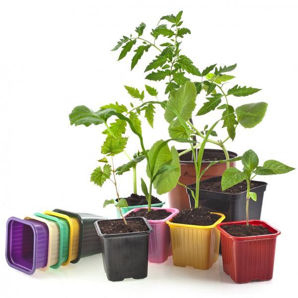 В чем же лучше выращивать рассаду?