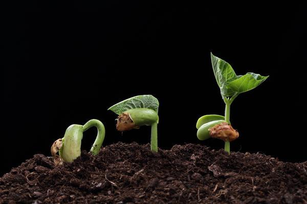Всхожесть семян - важный показатель