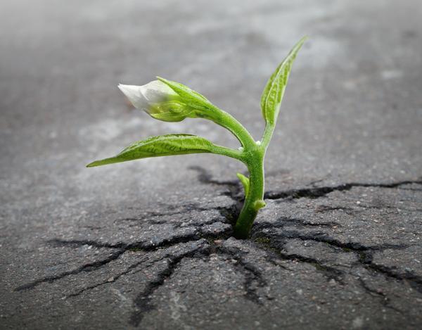 Известно, что хрупкий с виду росток может пробить своей силой и энергией роста даже асфальт