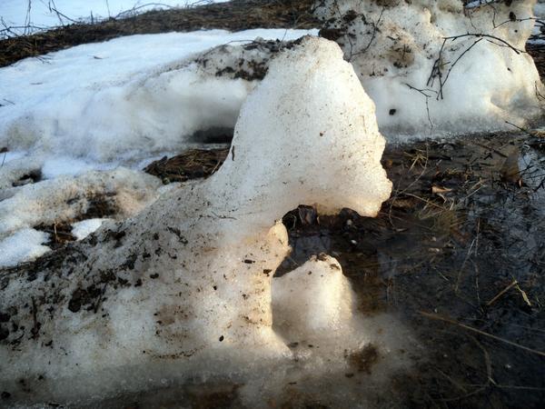 Снежный зверь на водопое