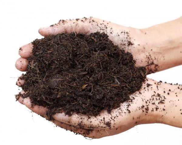 Почва для рассады очень важна