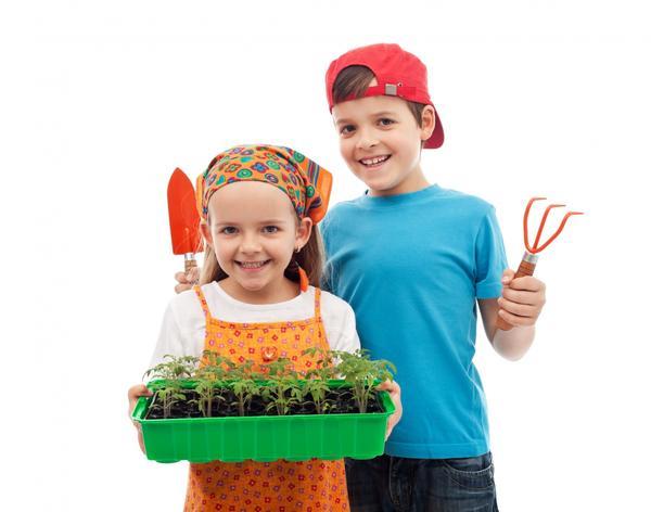 Выращивание рассады - увлекательный процесс