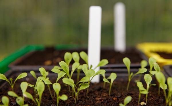 Важно не упустить время посевов на рассаду