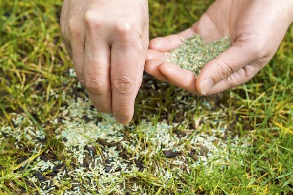 Поврежденный газон требует ремонта