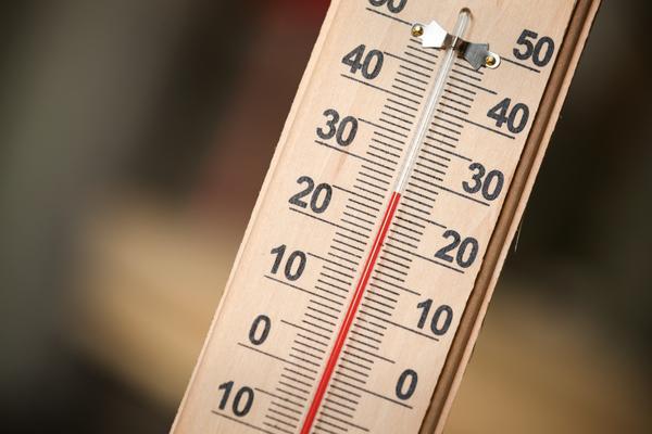 Высокая температура вредна капустной рассаде