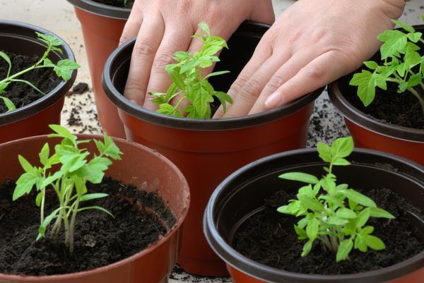 Хорошая рассада овощей - главная забота огородника в марте