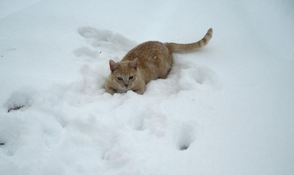 Коту снег в радость