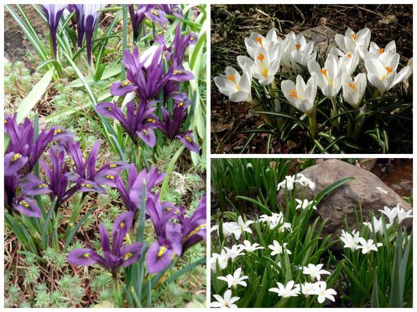 Первоцветы, апрель 2011