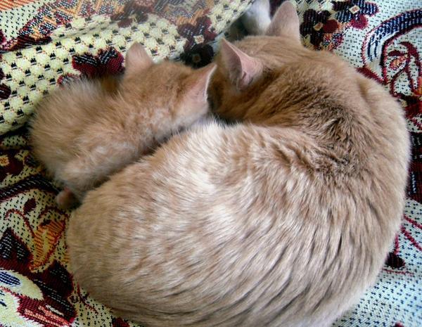 Два брата-кота