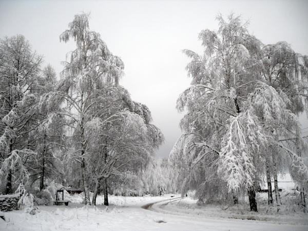 А у нас снег белый и пушистый