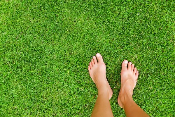 Хороший газон требует ухода