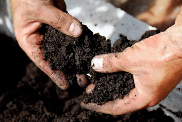 Понимать, какая почва на участке, очень важно