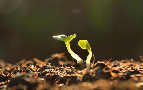 Каждому растению - своя почва