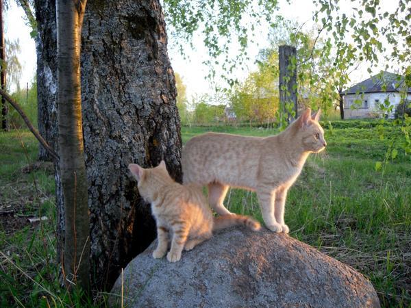 Котики перед вечерней охотой