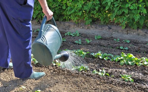Основная забота конца мая - уход за растениями