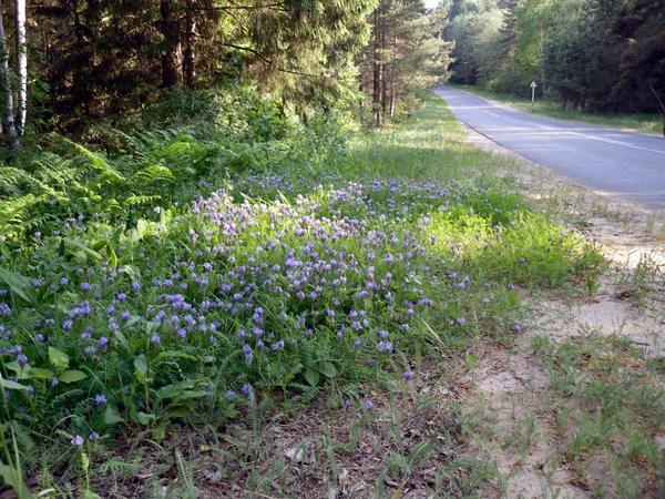 Цветочная полянка у дороги