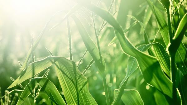 Органическое земледелие многие методы заимствует у природы