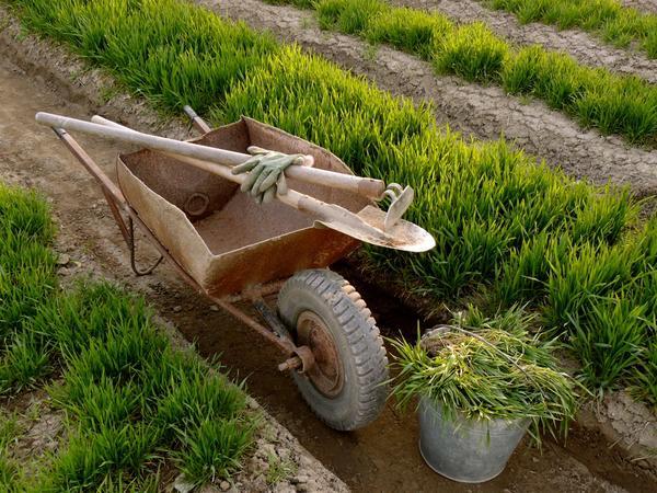 Растения сами могут служить удобрением