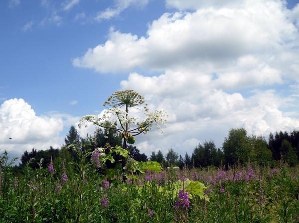 С одиночным растением справиться можно