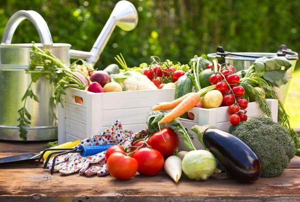 Настало время собирать урожай овощей