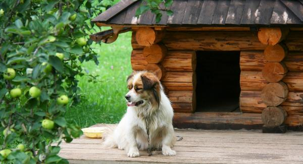 Такой собачий дом назвать конурой язык не повернется