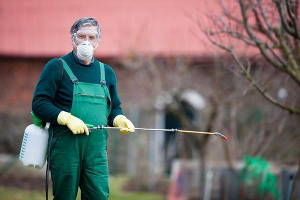 Когда другие средства не дали результата, в ход идут инсектициды