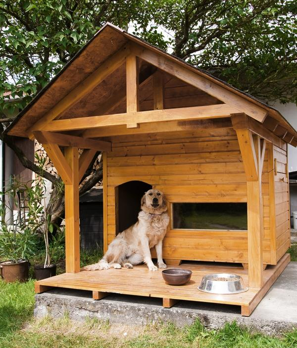 Большой собаке - большой дом