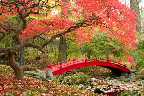 Красный мост и осенние клены