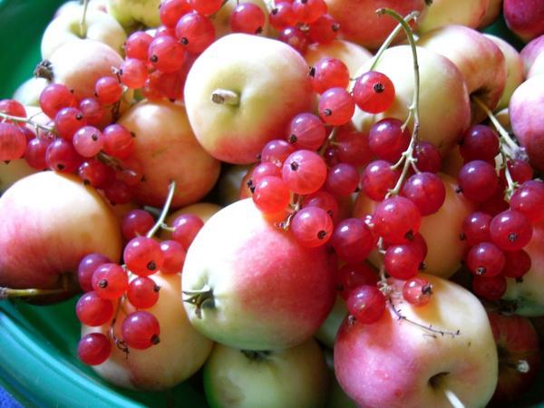 Яблоки со смородиной