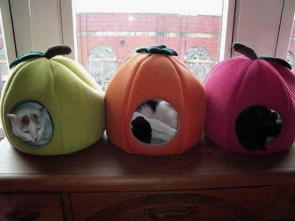 Вот такие фрукты... фото с сайта remals.com