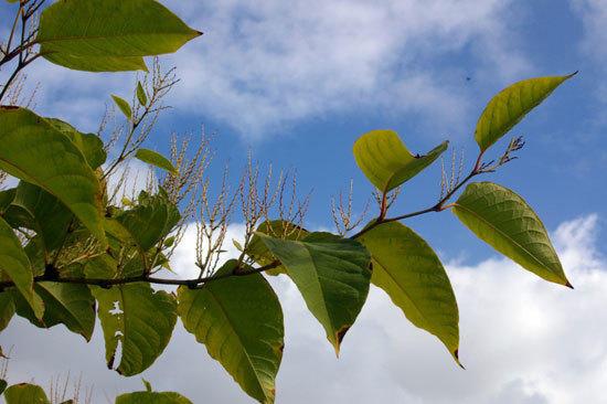 Не все растения подходят для закладки в компост