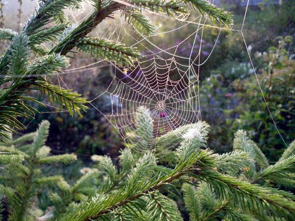 Осенняя паутинка