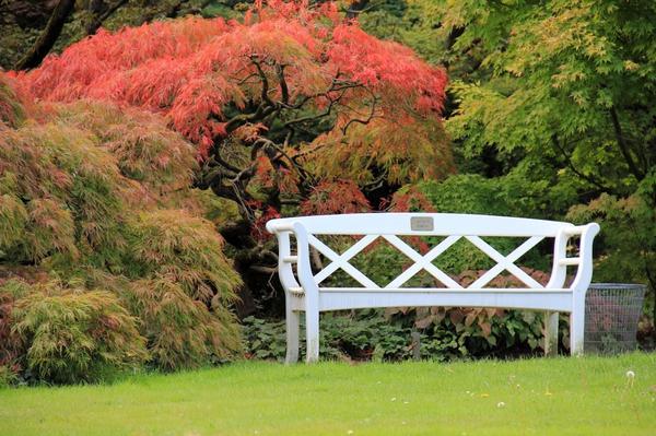 Скамейка в осеннем саду