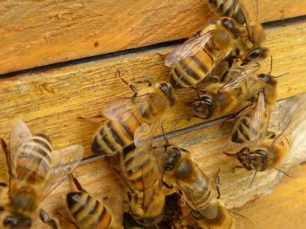 Труженицам-пчелам пора на зимовку