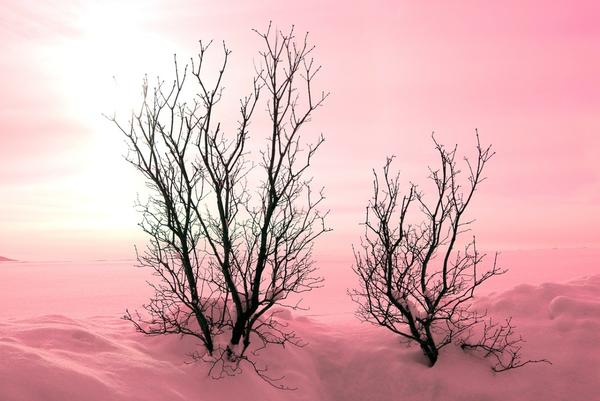 Сухие ветки хорошо задерживают снег