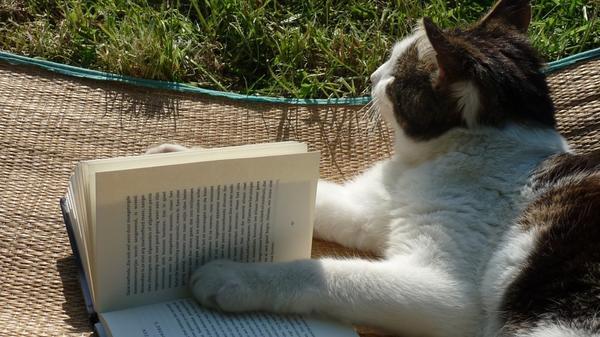 Порой искать нужную информацию в книгах просто некогда