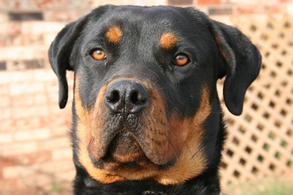 Хорошая собака - надежный охранник