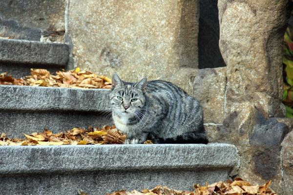 Желание помочь может побудить вас забрать кота домой