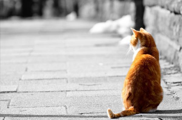 Пусть у каждого одинокого кота появится новый дом