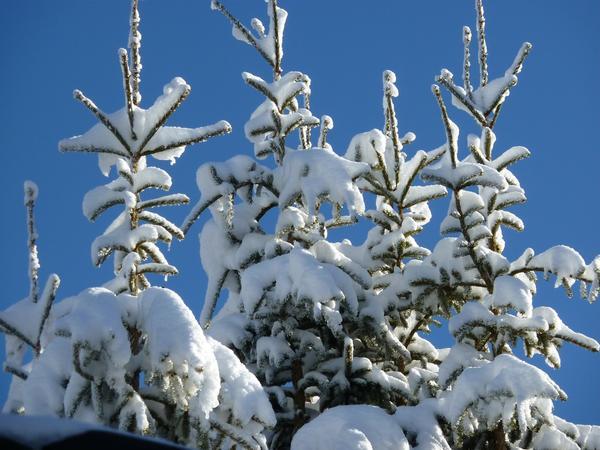 Снежные шапки - примета нашей зимы