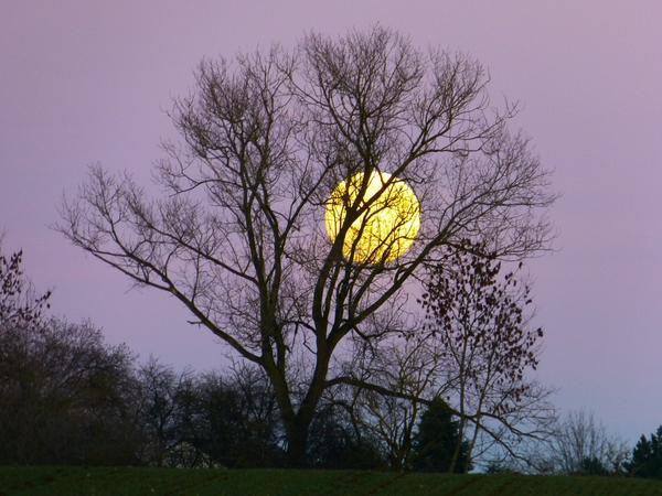 Многое в живом мире Земли зависит от движения Луны