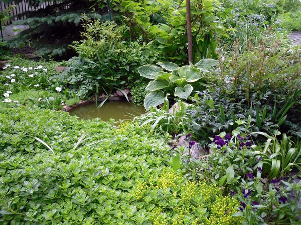 Зеленый - цвет гармонии и спокойствия