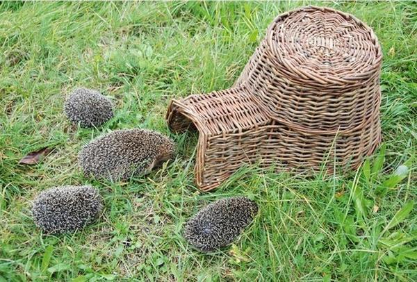 Плетеный домик для ежей, фото с сайта weather-station-products.co.uk