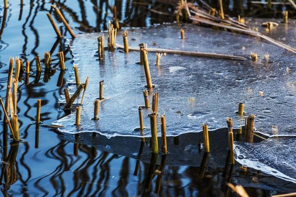 В середине апреля вскрывается лед на реках и озерах, просыпается водяной...