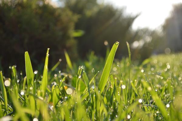 Большая роса утром - к хорошей погоде